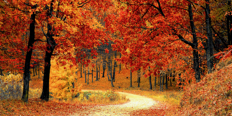 Picture of trail in the park during fall. The leaves are red, yellow and orange in Huntsville, AL
