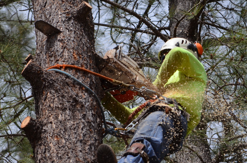 Tree removal Huntsville Al