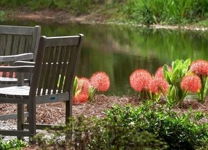 Picture of flowers in the botanical gardin in huntsville, AL